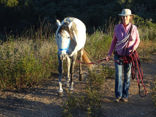 Walking with one of my lovely Lusitanos in Portugal