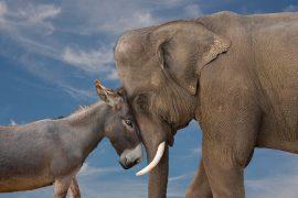 elephant-donkey