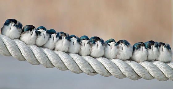 Birds on a rope