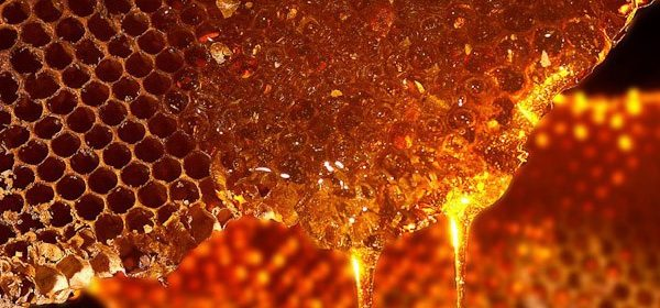 Bee hive, honey dripping