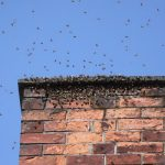 Bees in chimney