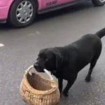 Dog with basket