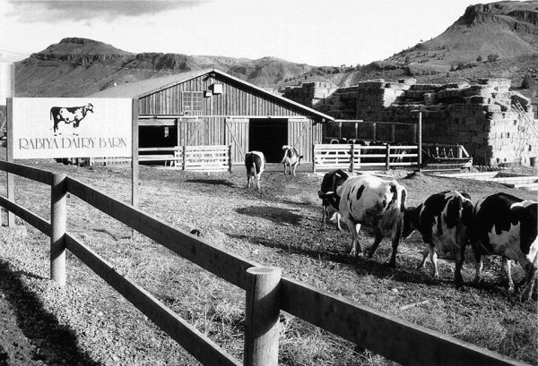 Rabiya Dairy Barn