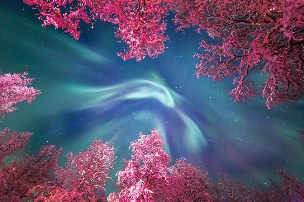 Aurora borealis swirling above snow covered trees in Murmansk, Russia, was made by Yulia Zhulikova