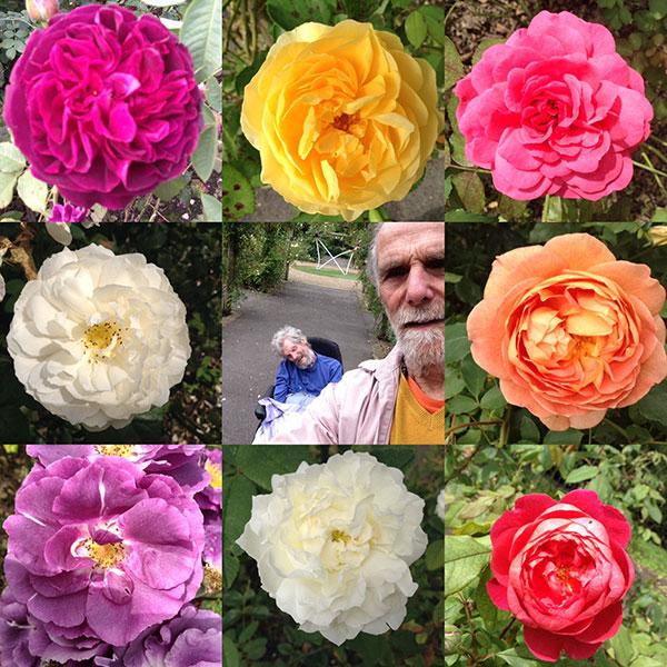 flower composite for Devopama