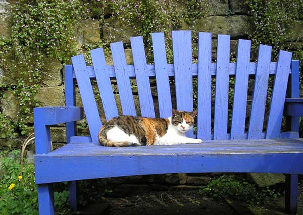 cat on blue bench
