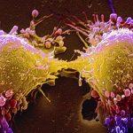 Cancer Cells Dividing