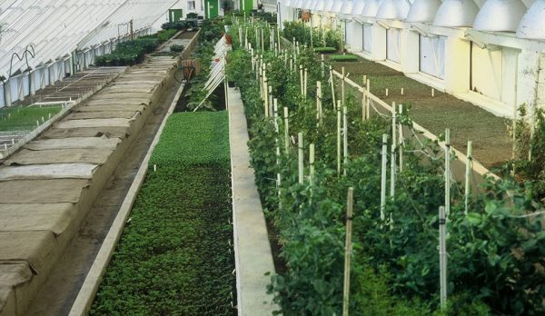 030-greenhouses 7 cr Stephen Grealy