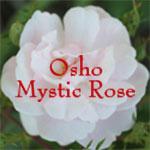Mystic Rose with Amar
