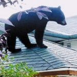 Bear on roof