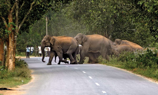 Corridor for elephants