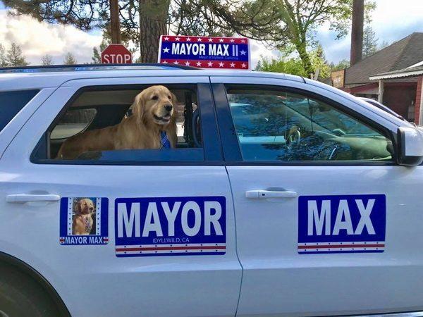 Mayor Max FB