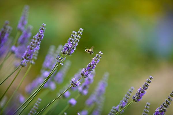 Allan photography: meadow