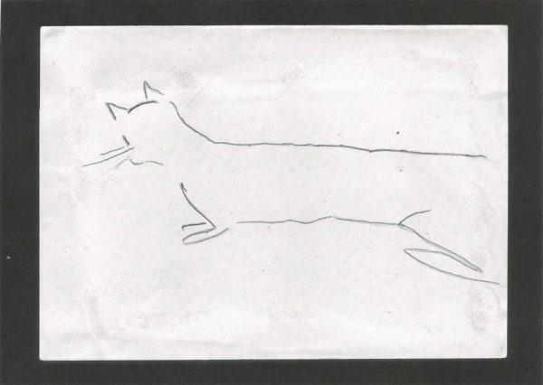 Cat by Madhuri