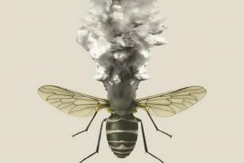Insect apocalypse Feat