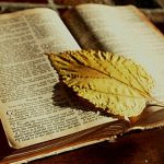 Leaf on Bible