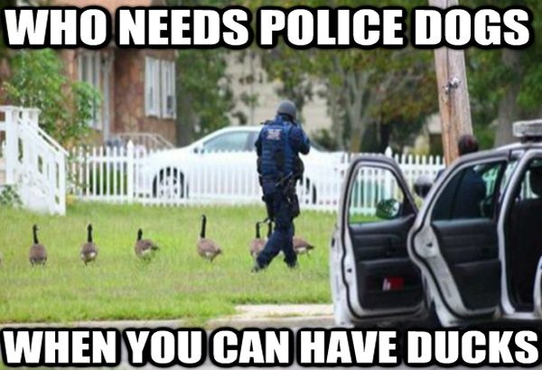 No need for police dogs