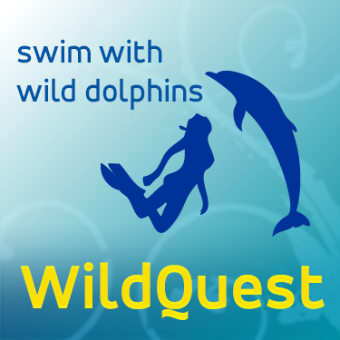 Wildquest - swim with wild dolphins