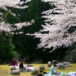 Cherry Blossom Painting Course