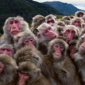 """Don't think of monkeys!"""