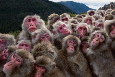 A tribe of monkeys