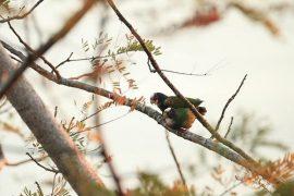 Birds in tree