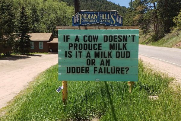 If a cow