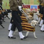 Dogs at India Republic Day parade