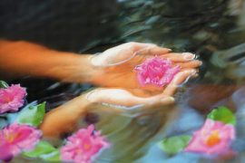 Hands holding a water lily