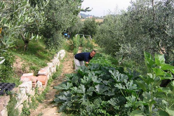 Our vegetable garden in Tuscany