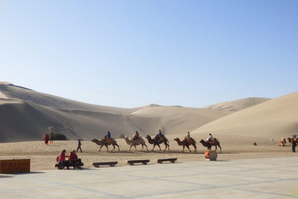 Tourists and camels