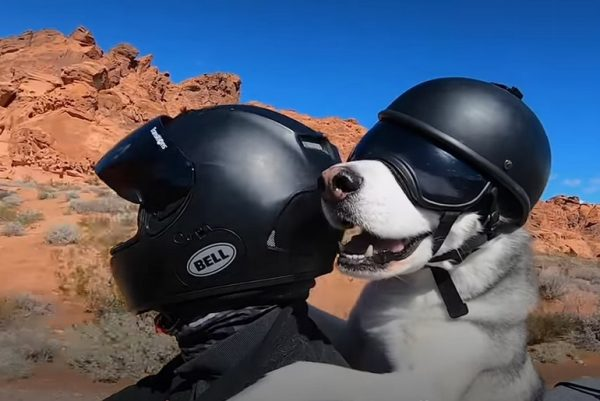 Man and dog on motorbike