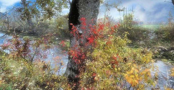 Darpan-Autumn-(10)