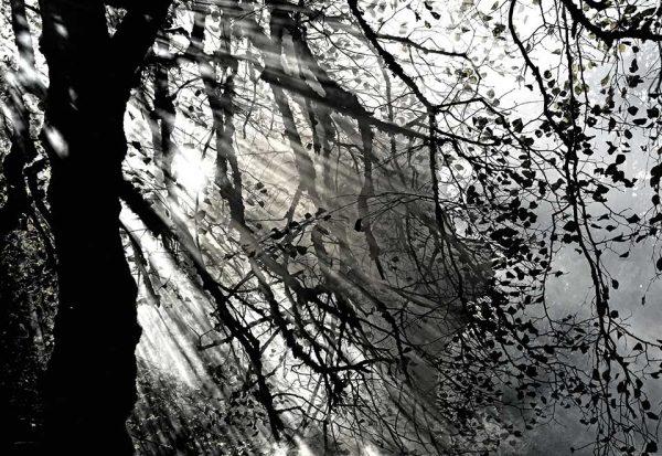 Darpan-Autumn-(14)