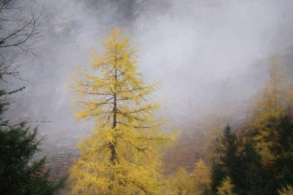Darpan-Autumn-(15)