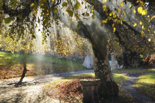 Darpan-Autumn-(16)
