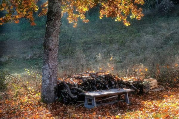 Darpan-Autumn-(17)