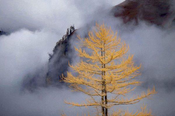 Darpan-Autumn-(2)