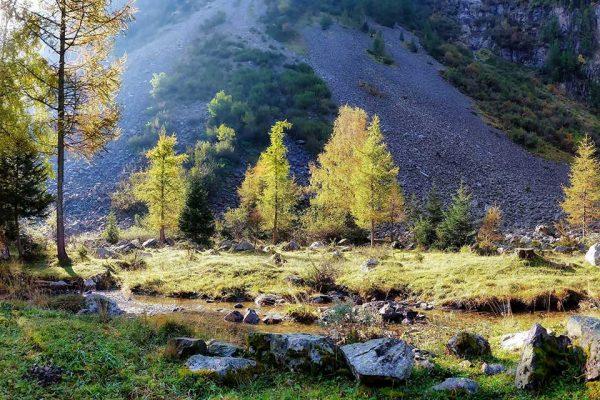 Darpan-Autumn-(3)