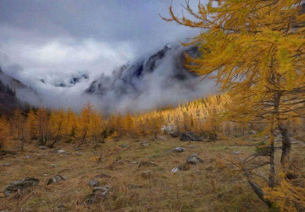 Darpan-Autumn-(4)