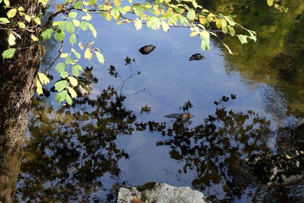 Darpan-Autumn-(5)