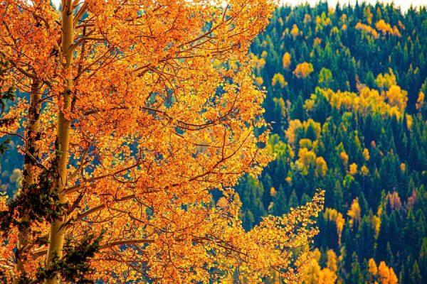 020 Allan_Forest_Autumn22