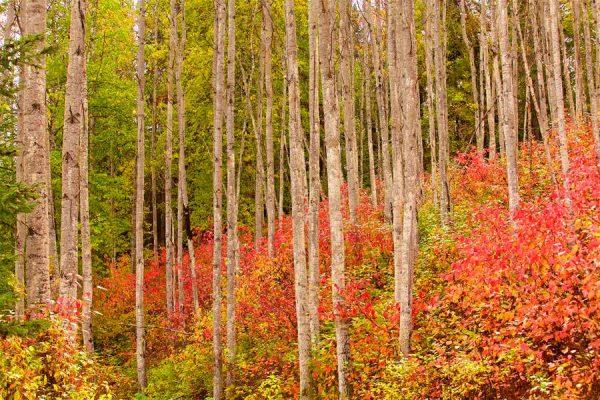 025 Allan_Forest_Autumn02