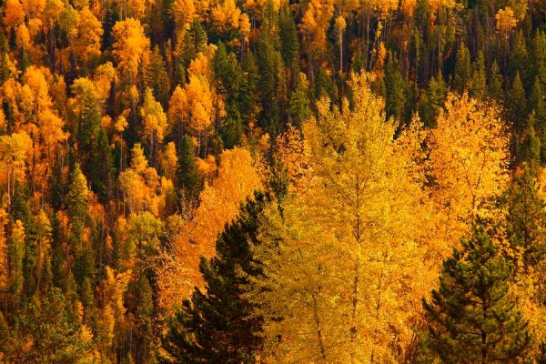 030 Allan_Forest_Autumn06