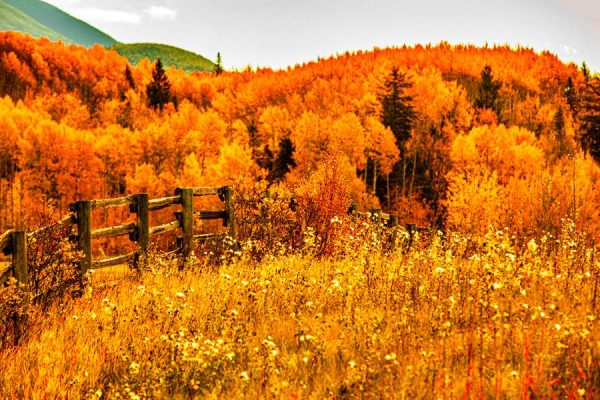 050 Allan_Forest_Autumn12