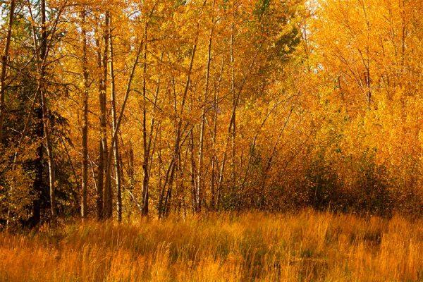 070 Allan_Forest_Autumn14