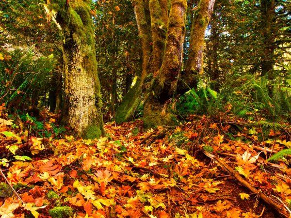 080 Allan_Forest_Autumn10