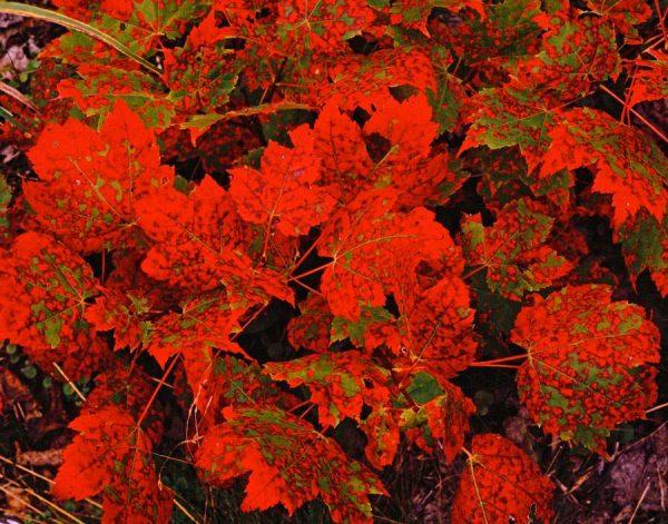 090 Allan_Forest_Autumn04