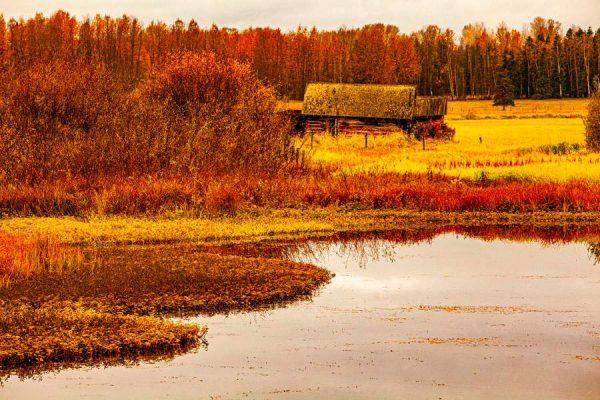 100 Allan_Forest_Autumn15