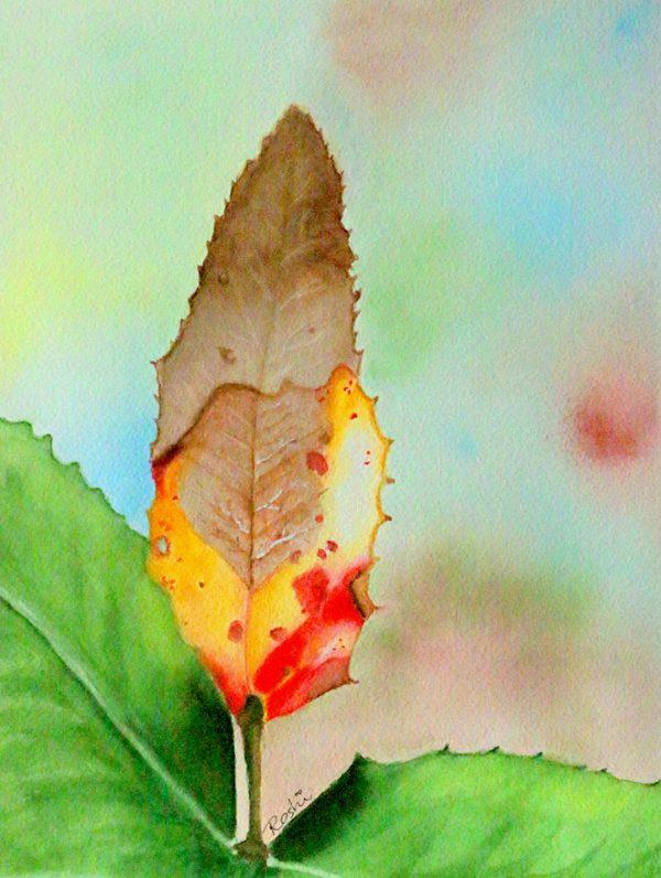 120 Lone-Leaf